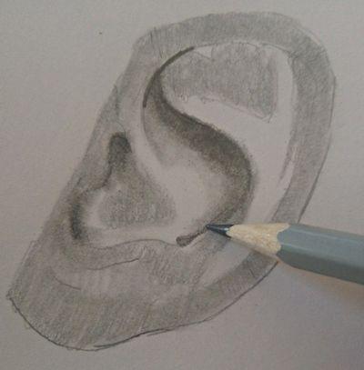 Rysunek ucha (4)