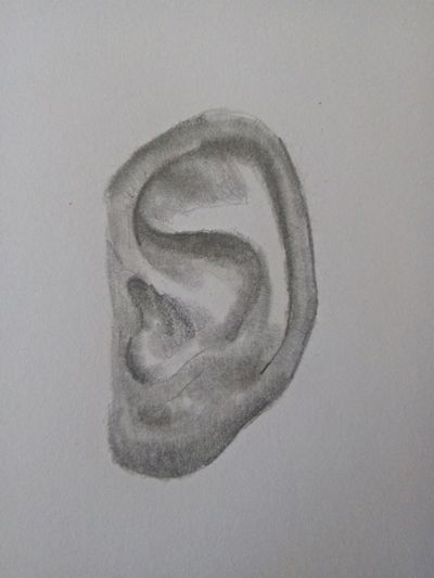 Rysunek ucha (5)