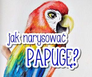 Jak narysować papugę kredkami?