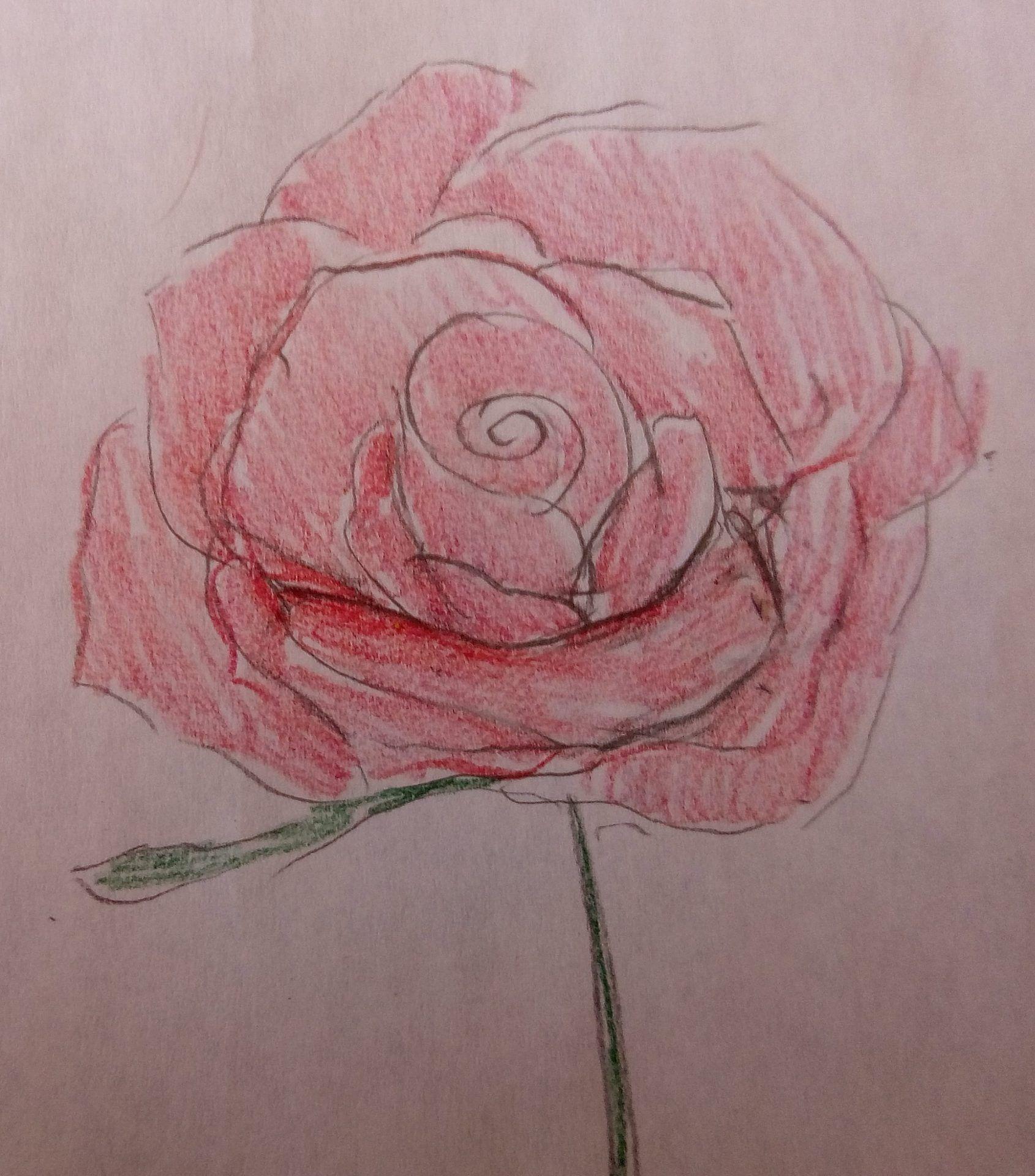 kwiaty-rysunek (10)