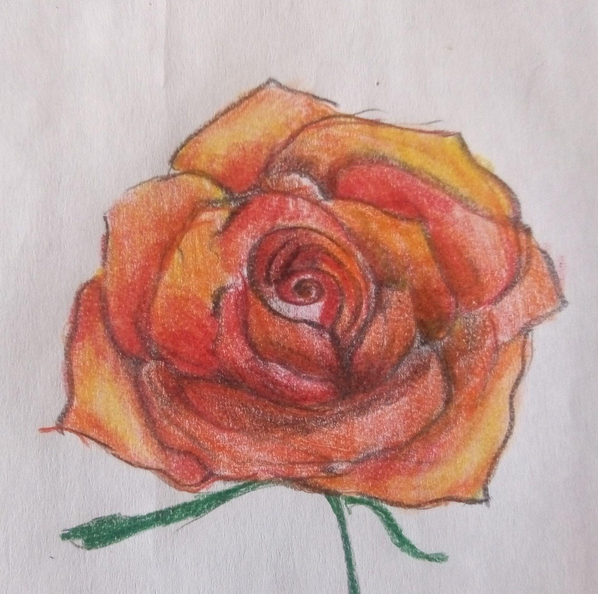 kwiaty-rysunek (13)
