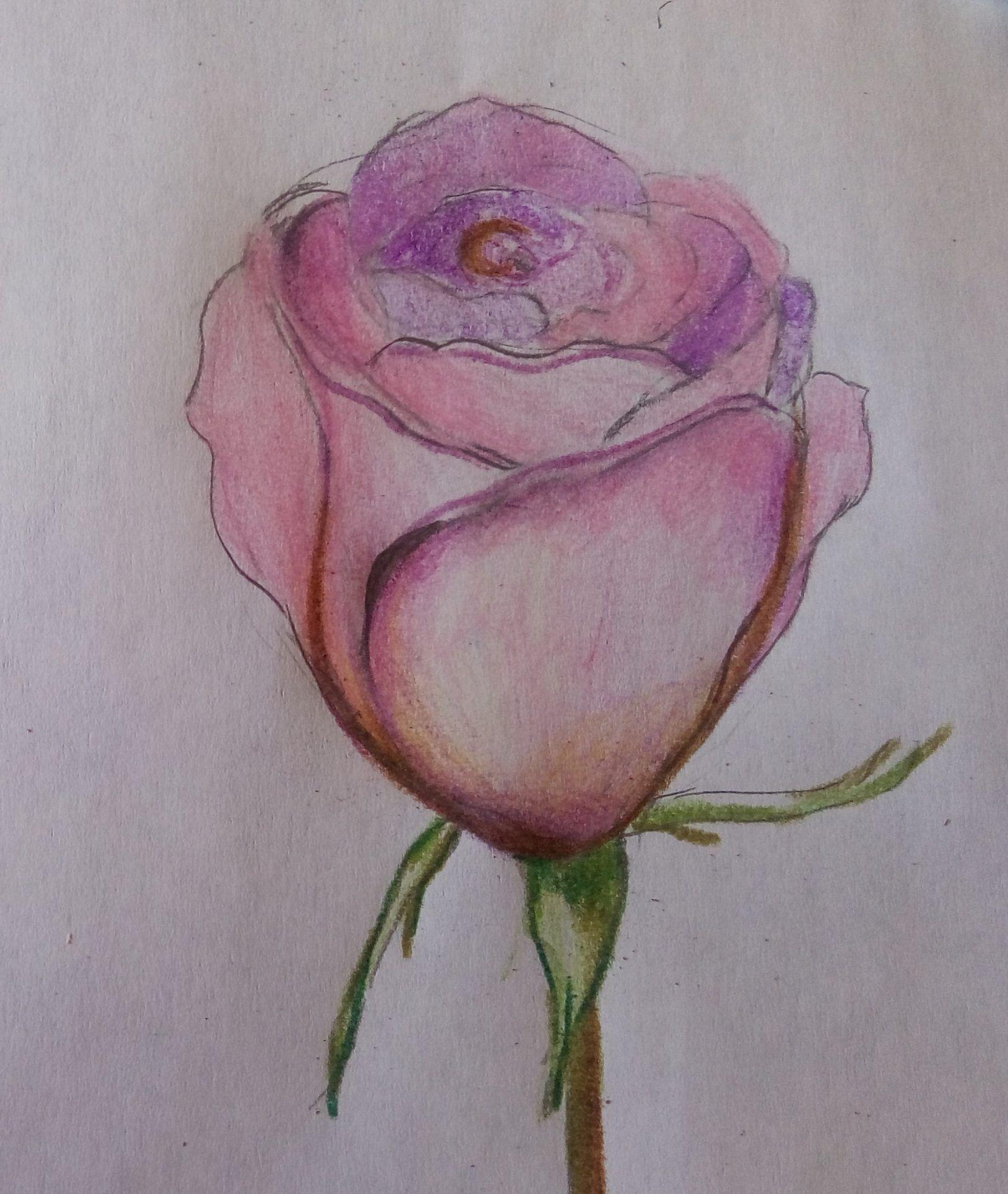 kwiaty-rysunek (6)