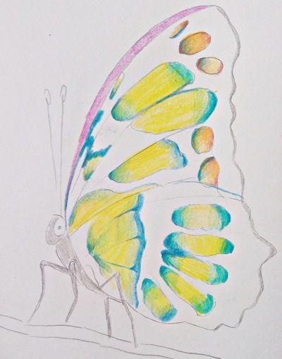 łatwe rysunki motyl