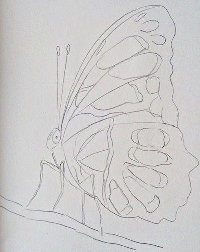 motyl rysunek