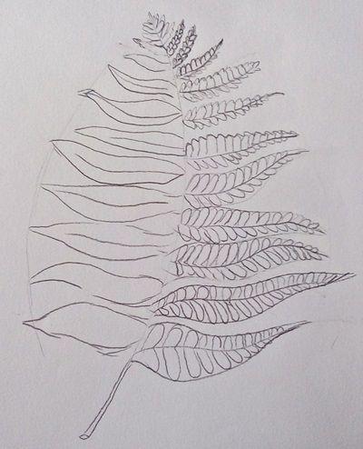 paproć rysunek liścia