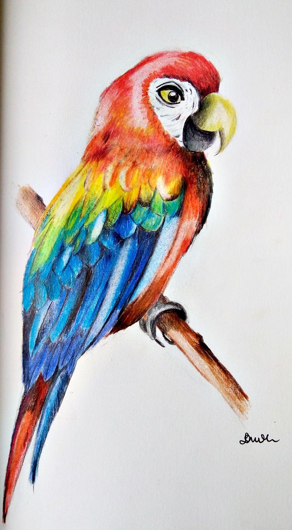 papuga rysunek katarzyna duda