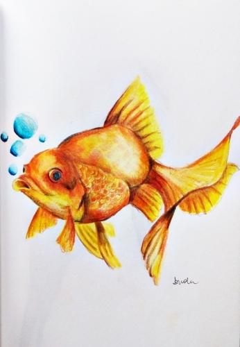 rysunek złota rybka