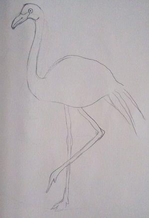rysunek flaminga